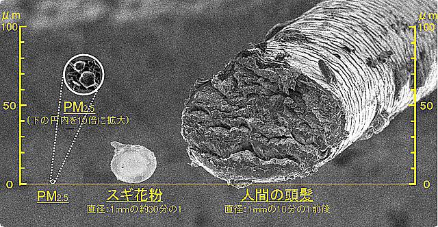 pm2.5_杉花粉の大きさ