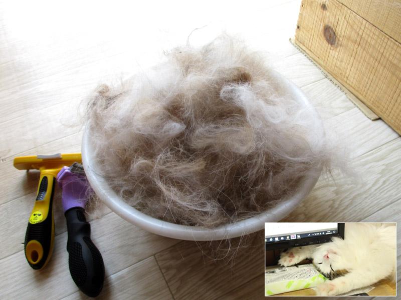ペット(犬猫)の抜け毛の掃除におすすめのコードレス掃除機