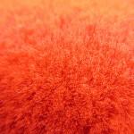 フェルトのローラー(赤)