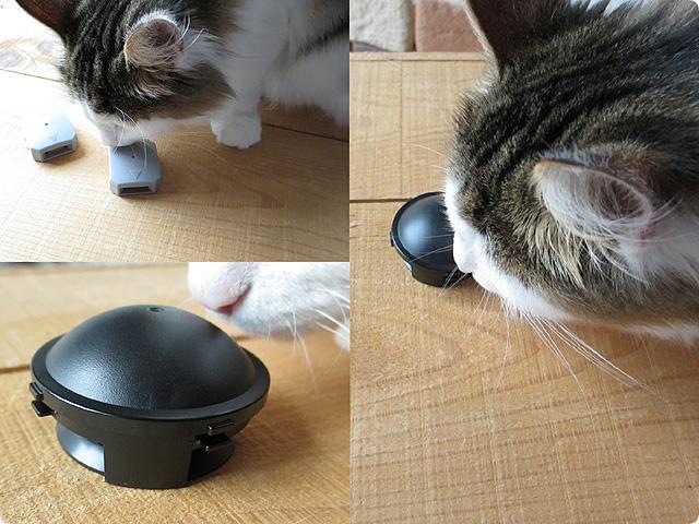 ブラックキャップ 猫