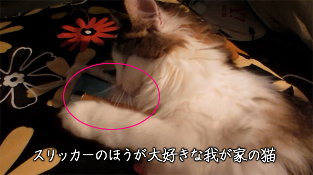 スリッカーだと嫌がらない猫