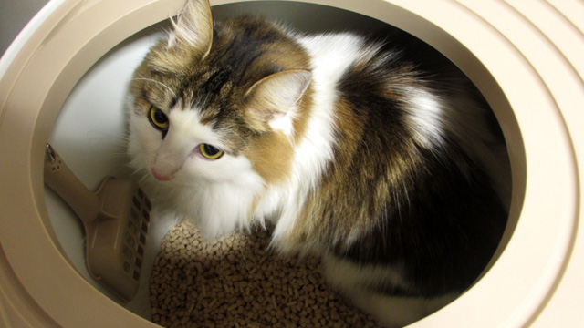 カチカチに固まるおすすめの猫砂