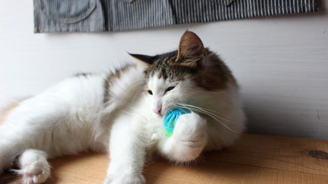 マットを荒らす猫