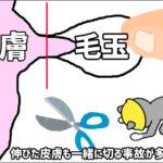 猫や犬の毛玉と一緒に皮膚を切り原因