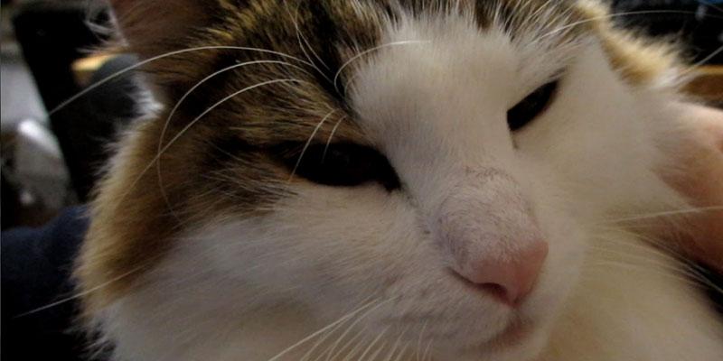 アルコールティッシュ 猫
