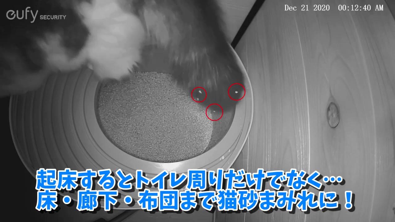 猫の体に付着した砂