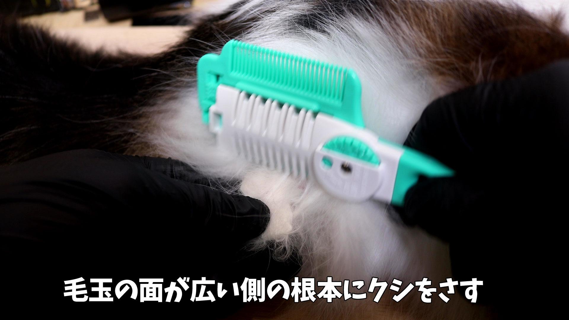 ヘアカッターで猫の毛玉を安全にカット1